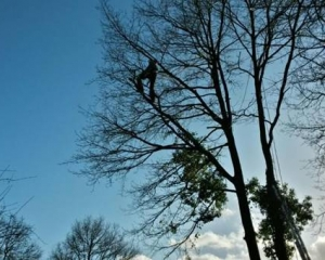 boom klimmen